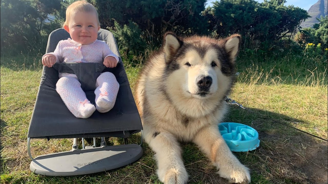 Life With Malamutes And Baby Vanlife Campervan Vlog Come On Holiday With Us Youtube Life with malamutes total subscribers count stats. life with malamutes and baby vanlife campervan vlog come on holiday with us