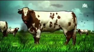 responsabilite des vaches d'elevage industriel dans l'effet de serre.avi