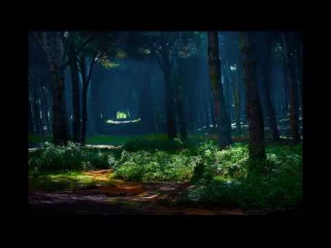 Top 11 Most Amazing and Best Unbelievable Breathtaking Forests in Belgium