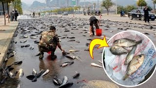 They Wake up The Next Day and The Sky Was Raining Fish