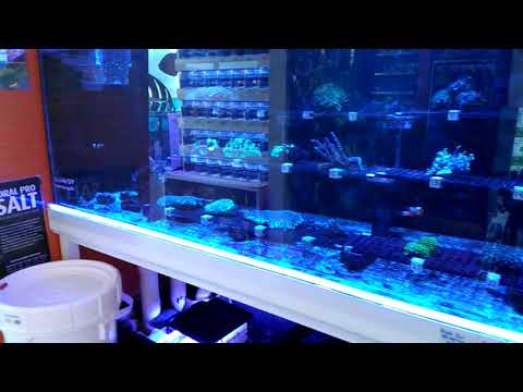 The Fish Room In Raleigh NC