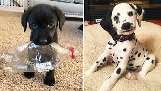 Cute Puppies Doing Funny Things, Cutest Puppies in the Worlds 2020 ♥ #2  Cutest Dogs