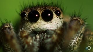 Spider Mesmerizes His Date | North America