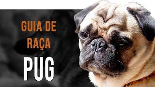 PUG  Todo sobre la raza de perro