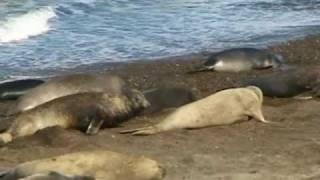 Argentine Video Patagonie nature sauvage de la Terre de Feu