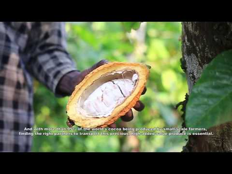 MSC, your partner in the journey of cocoa