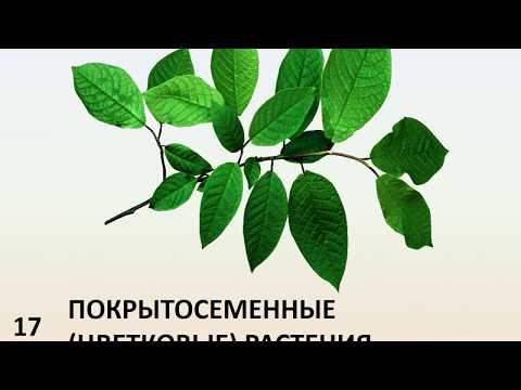 Вопрос: Когда появились цветковые растения на нашей планете и как?