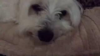 Rocky the funny DOG!!!!!!!!!!!!!!!!!!!!