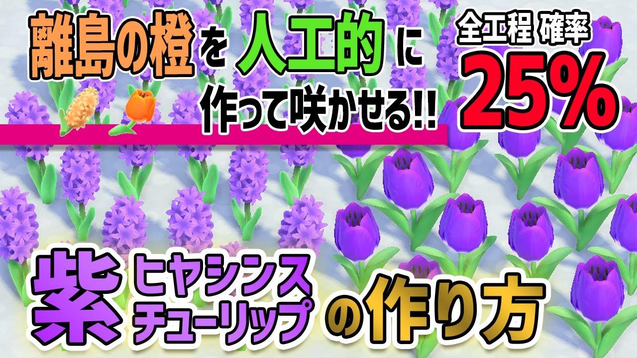どうぶつの森ヒヤシンス紫