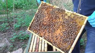 29.04.2019 Poszerzanie Gniazda W Dadancie, Zachęcam Pszczoły Do Wejścia Do Nadstawek.