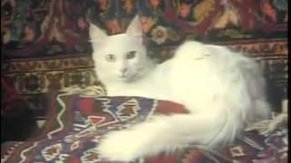 BBC Cats (1991)  Ankara & Van.avi