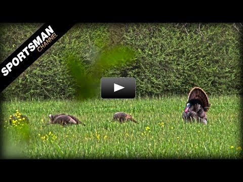 The Greatest Decision I Ever Made As A Turkey Hunter