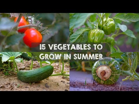 15 Vegetables & Herbs You MUST Grow In SUMMER