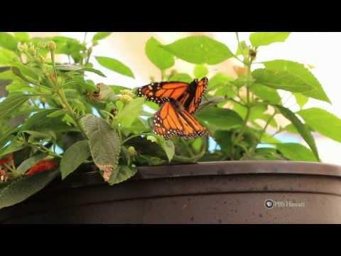 PBS Hawaii - HIKI NŌ Episode 512 | Hosted by Hawaii Preparatory Academy | Full Program