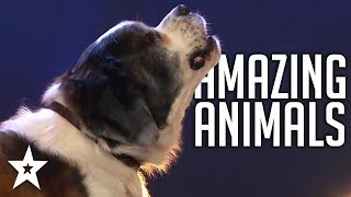 AMAZING Animal Auditions On Got Talent 2019 | Got Talent Global