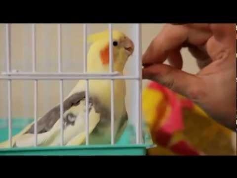 О растениях и животных. Попугаи кореллы.