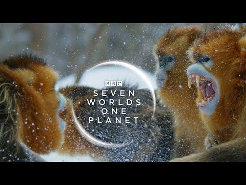 Seven Worlds One Planet: New Trailer | David Attenborough Series |  BBC Earth