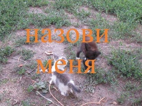 Вопрос: Как можно назвать оригинально котика тигрового окраса?