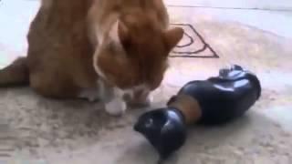 кошки, Смех и только, Новые Приколы, Шутки, Смешные ролики Юмор! Прикол! Смех Смешные приколы с кошк