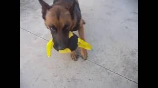 Кусалка мяч для собак Fordogtrainers
