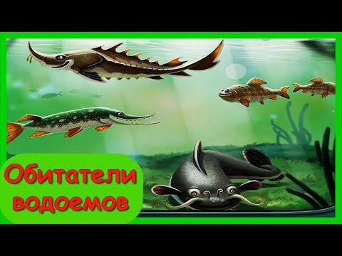 ПЛАНЕТА ВОДА 🦞 Обитатели водоемов 1 часть/ Интересное  Обучающее Видео Для Детей