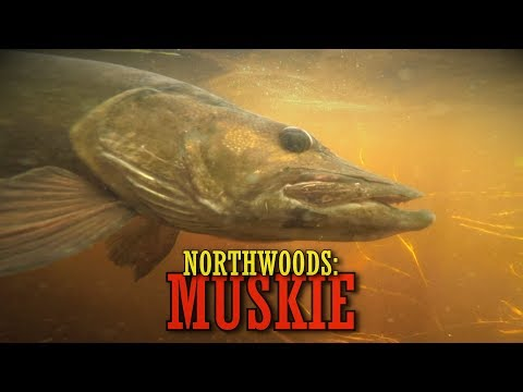 A Northwoods Wisconsin Musky Hunt