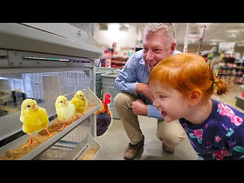 Grandpa takes Adley on a SECRET SURPRISE Play Date!!  (new baby chickens and farm animals)