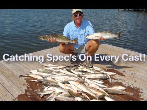 Catching Surfacing Speckle Trout Every Cast