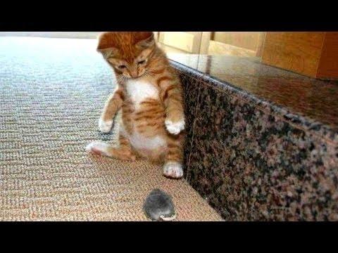 Kucing Takut Tikus Dan Burung  Kompilasi Kucing Lucu