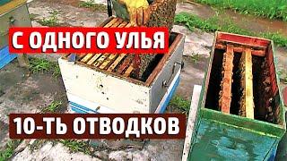Наглядный СПОСОБ БЫСТРОГО РАСШИРЕНИЯ ПАСЕКИ Отводки пчел Подсадка маток