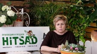 видео Декоративный кустарник барбарис: фото и описание, посадка, уход и размножение в саду