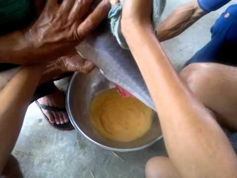 AIT-Training - Pangasius Breeding3