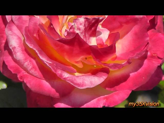 Rose Garden - Colonial Park in HD