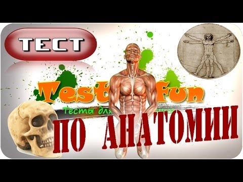 Тест по анатомии