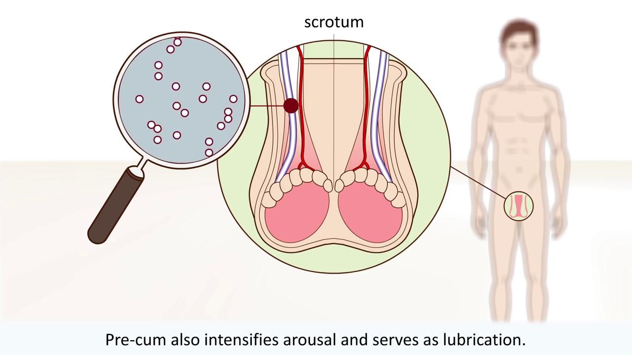 Anatomy of an orgasm — img 10