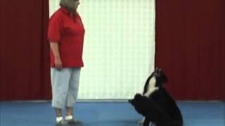 Canine Freestyle Brace Training Tips