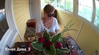видео Флористика для дачи