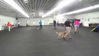 Alden's Kennels Dog Training & Dog Boarding Crystal Lake Il