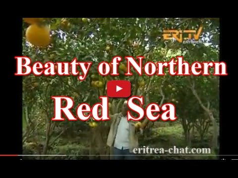 Eritrean Northern Red Sea Docu About Tourism - Agriculture - Blue Gold - History and Companies