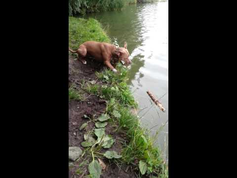 Frustrated dog wants his stick back