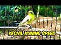 Kecial Kuning Gacor Speed Rapat Suara Jernih  Mp3 - Mp4 Download