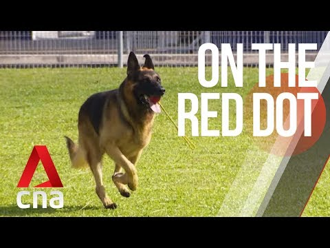 CNA   On The Red Dot   S8 E31: Our lives with dogs - Paws that work