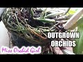 Why you shouldn't let Orchids grow out of the pot | AskMissOG 😎 #1