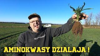 Marek Ogląda Swoje Plantacje ☆ Aminokwasy Działają ! ☆ [Vlog #68] ☆ jarekogarek1986