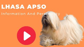All Dogs Breeds - Lhasa Apso Breed Information And Personality