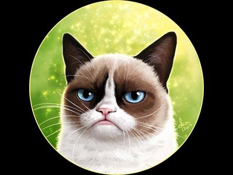 Grumpy Cat  -  самый сердитый кот (угрюмый кот Тард)