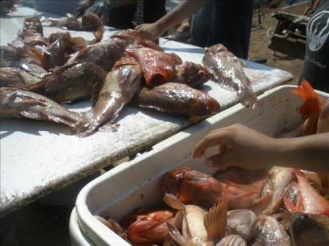 Erendira Baja California Fishing On Castro