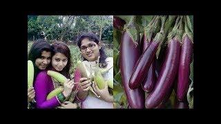 Uygunsuz Kullanımı Nedeniyle Kadınların Muz, Patlıcan, Salata Alması Yasak