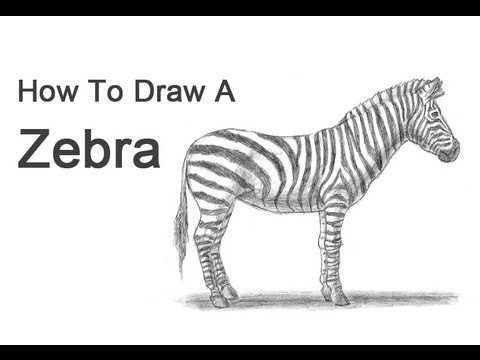 How To Draw A Zebra YouTube