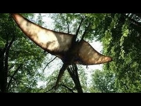The Demon Flyer Creature of Papua New Guinea Documentary